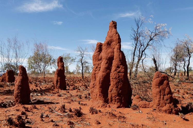 Las termitas, maestras del aire acondicionado